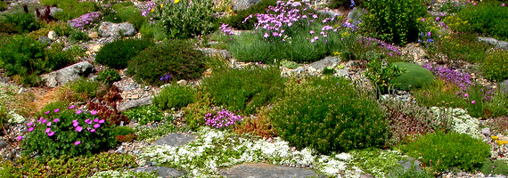 17 Best images about Rock Gardens – Plants for a Rock Garden